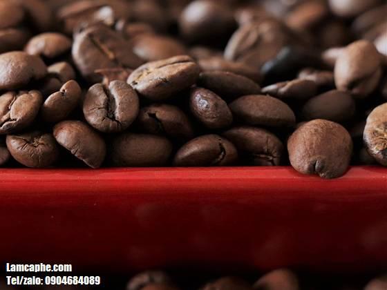 cafe-robusta-0904684089_1_10