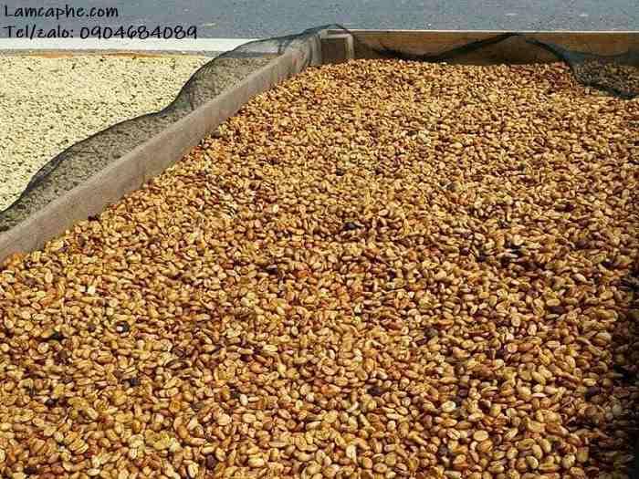 ca-phe-robusta-loai-1-xuat-khau-0904684089-1_10